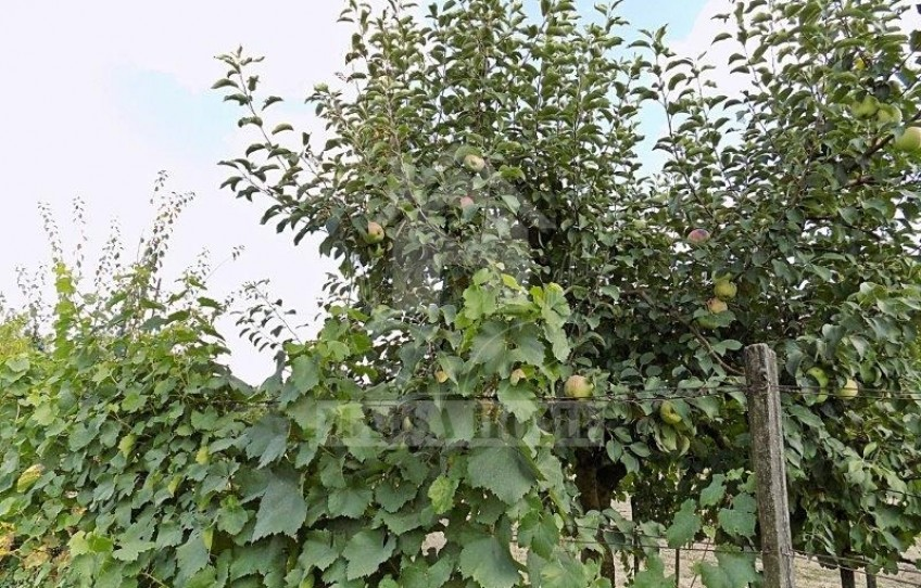 Kiskunmajsa Eladó Mezőgazdasági